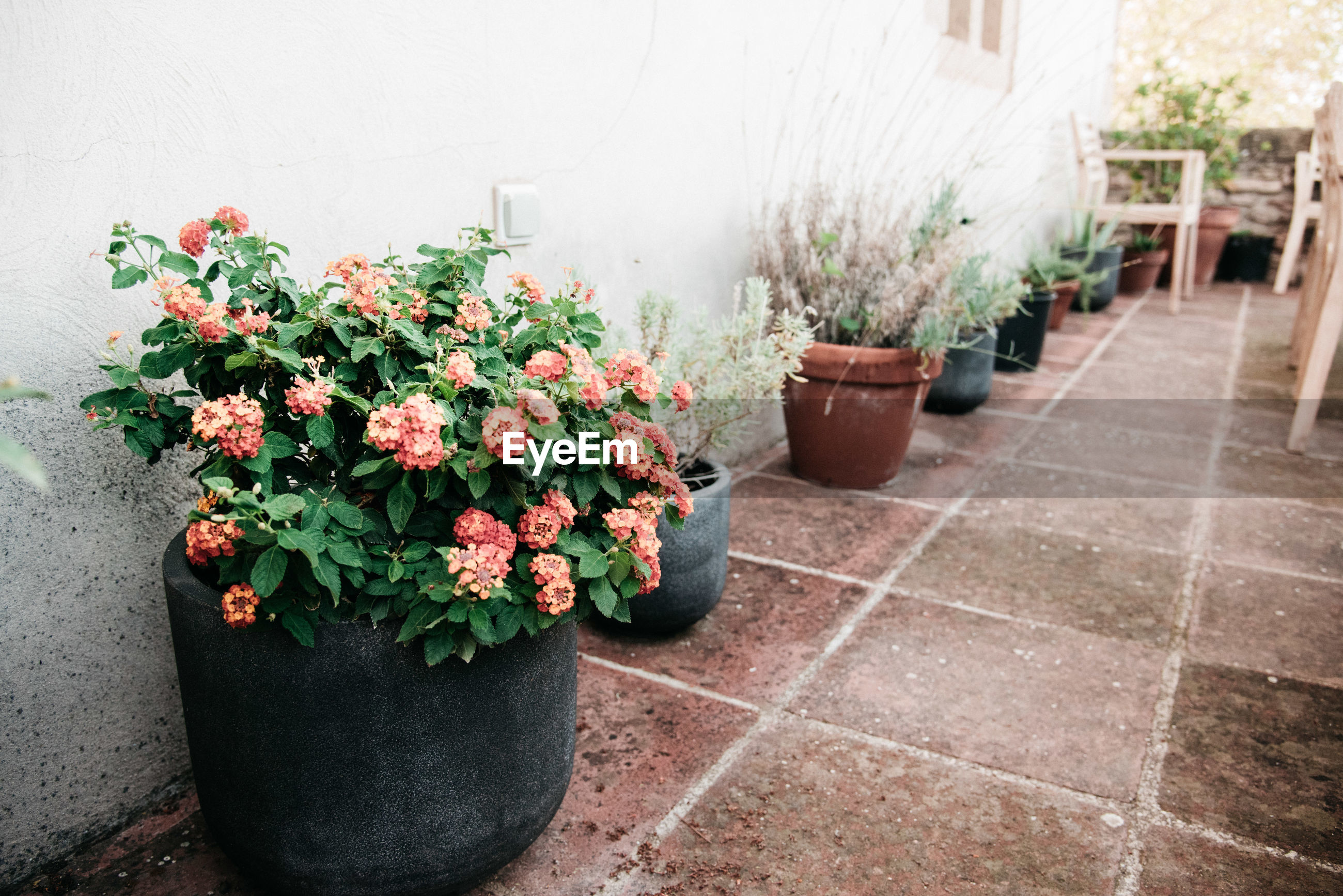 POTTED PLANTS ON PLANT