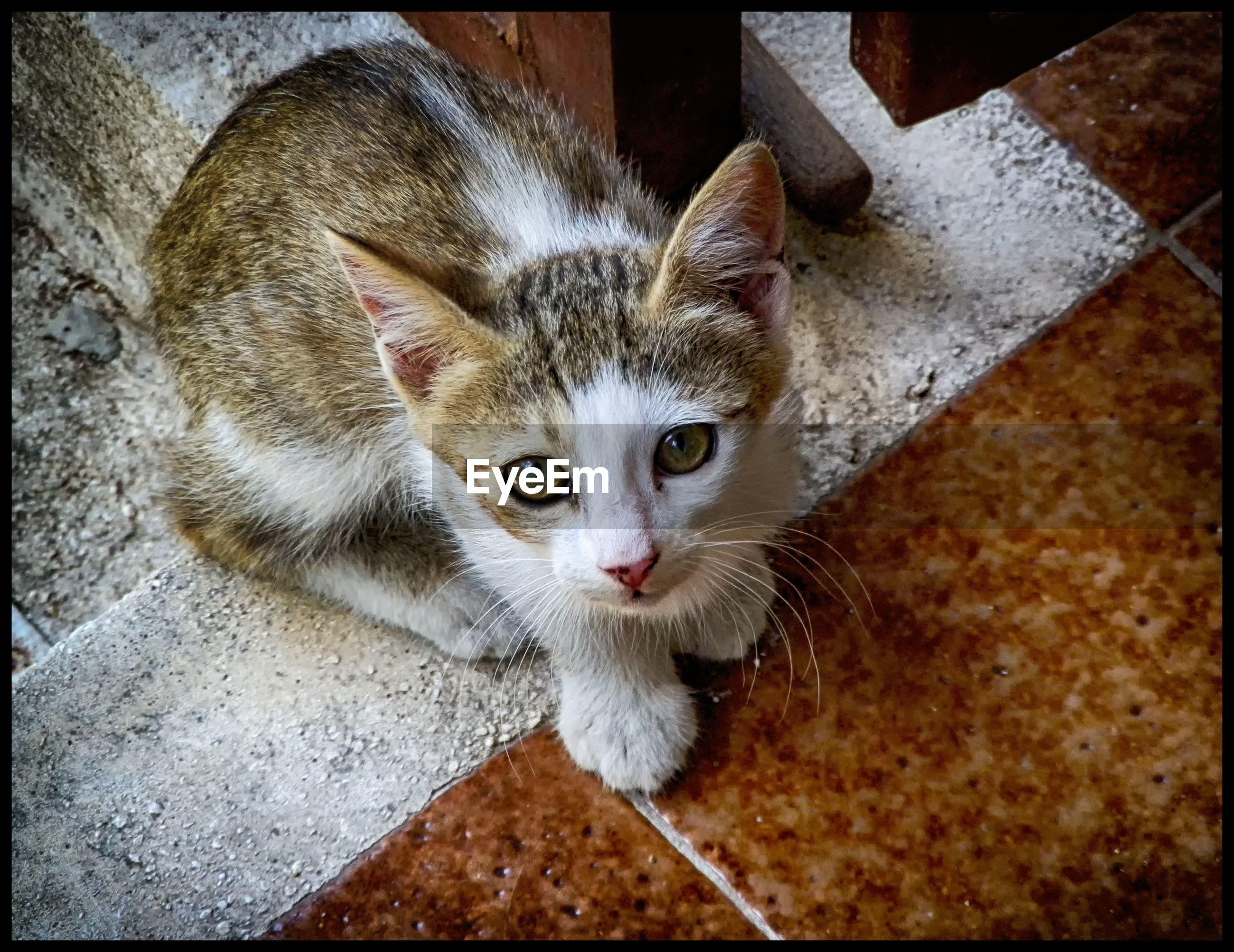 pets, animal themes, one animal, transfer print, domestic cat, domestic animals, cat, portrait, looking at camera, mammal, feline, auto post production filter, whisker, indoors, high angle view, animal head, close-up, alertness, staring, young animal