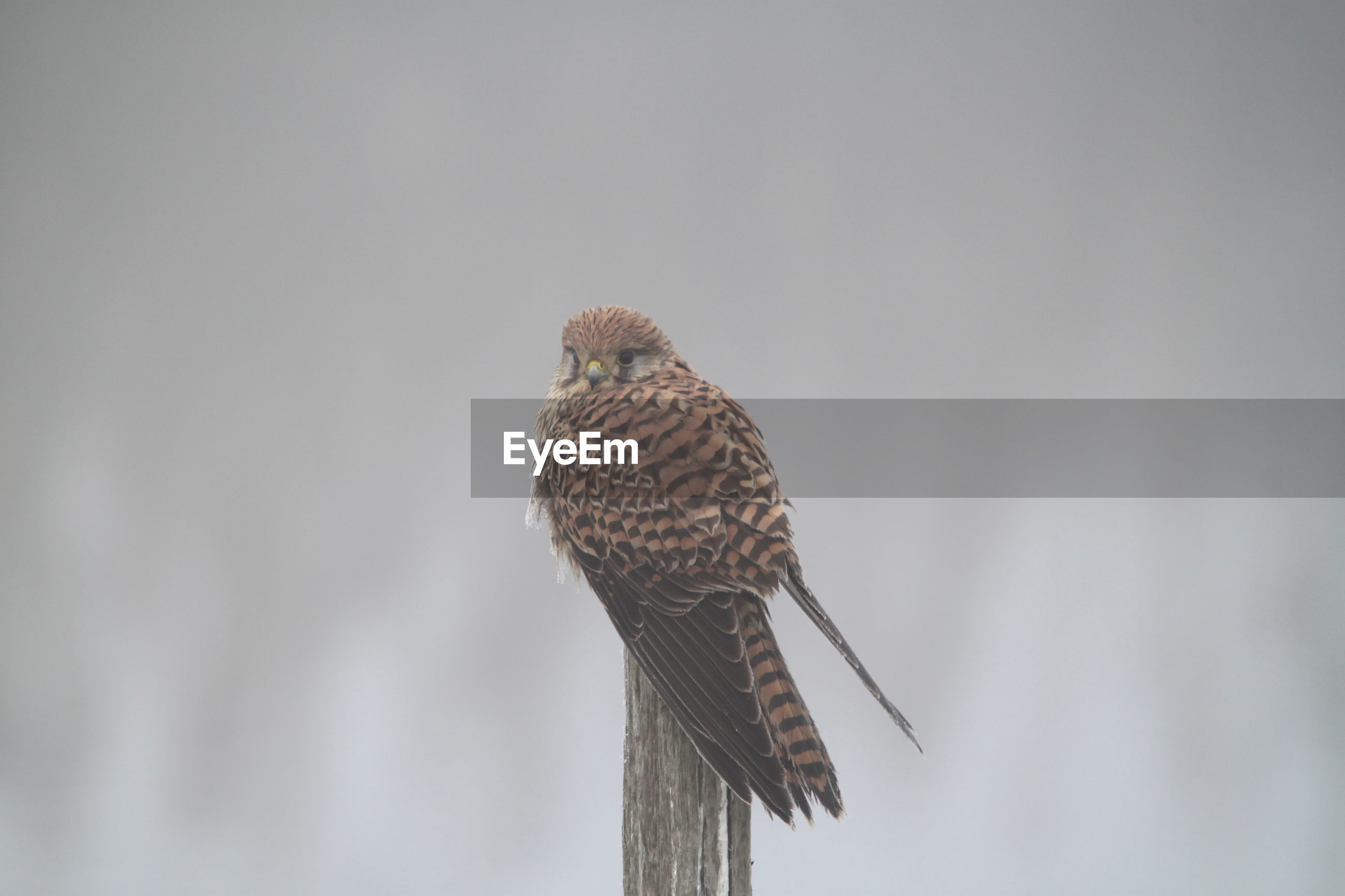 LOW ANGLE VIEW OF OWL PERCHING ON WOODEN POST