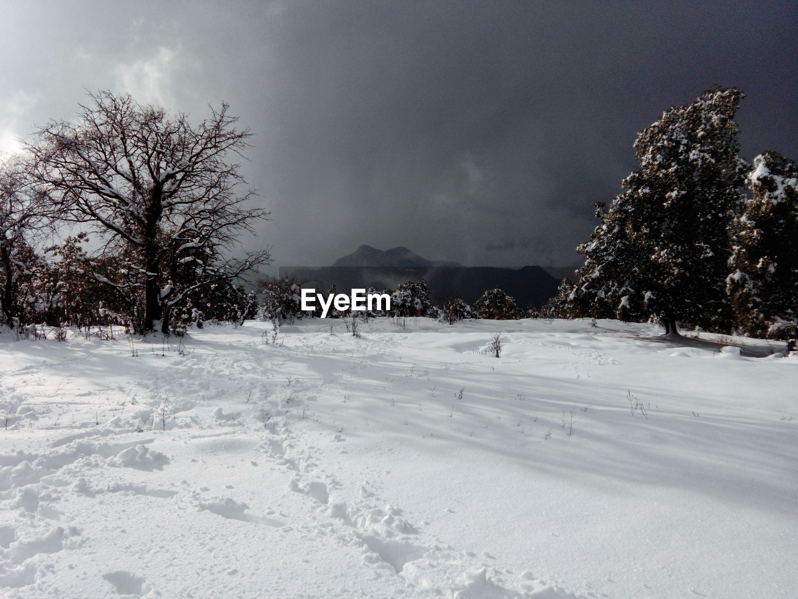 TREES ON SNOWY LANDSCAPE AGAINST SKY