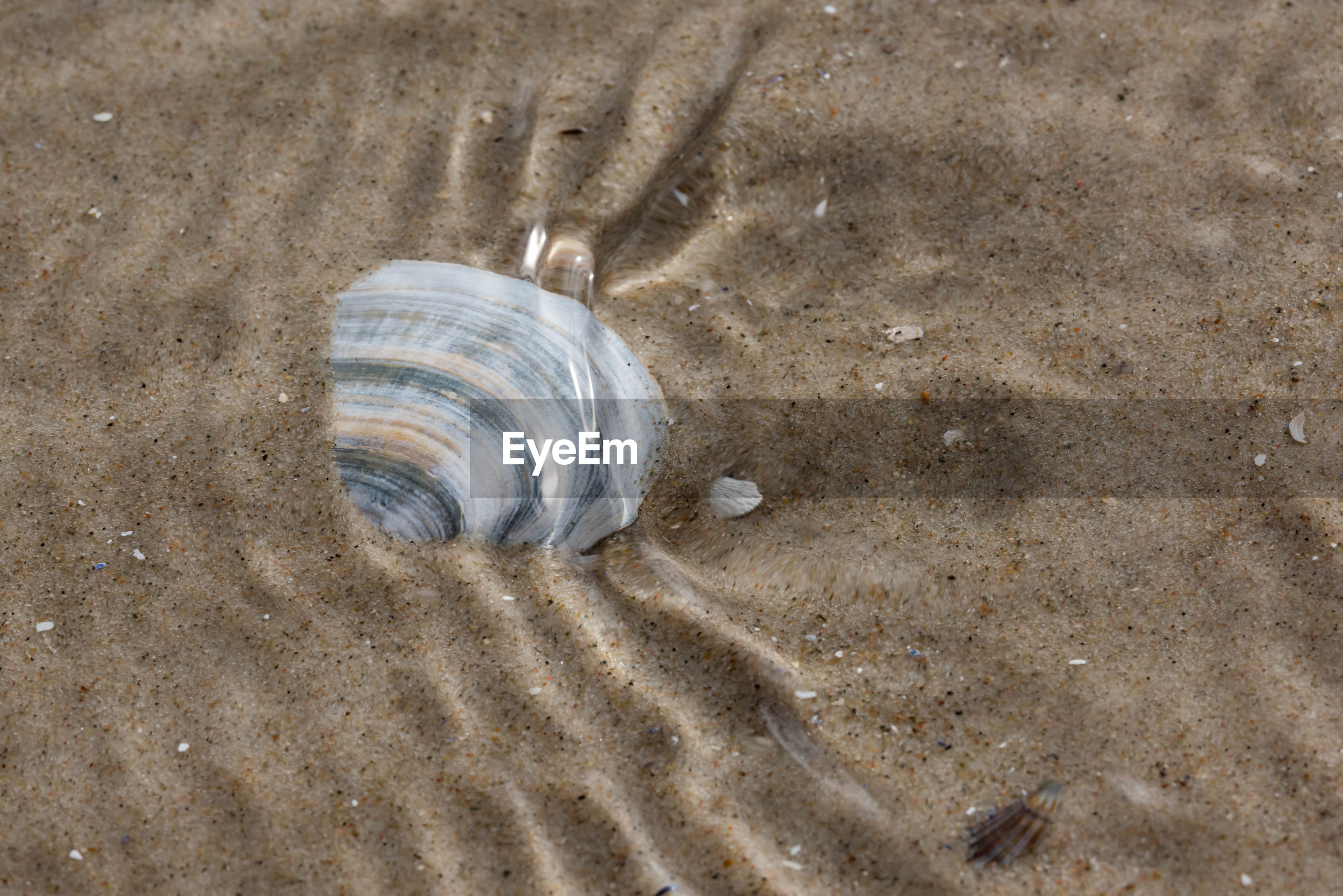 High angle view of seashell in sand on shore