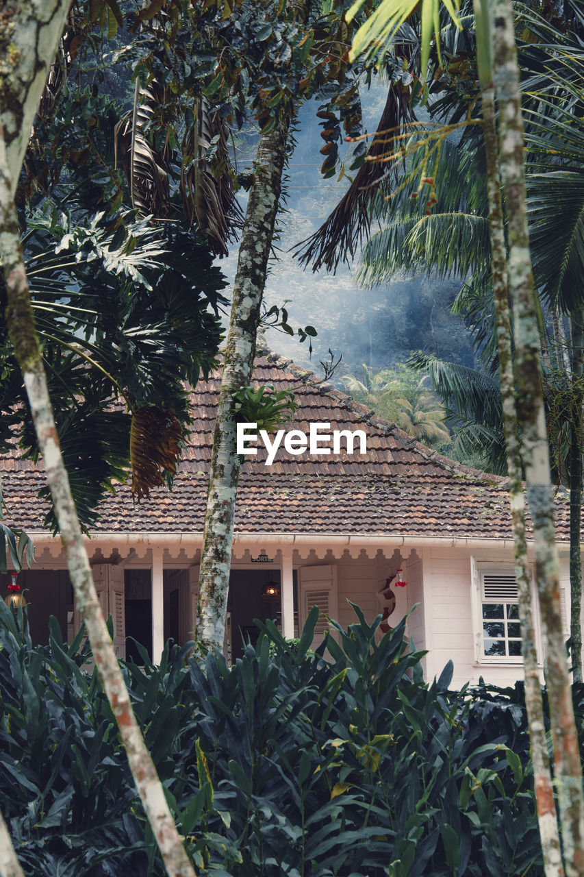 plant, built structure, building exterior, tree, architecture, house, growth, building, tropical climate, palm tree, nature, leaf, plant part, day, no people, roof, residential district, outdoors, green color, front or back yard, roof tile