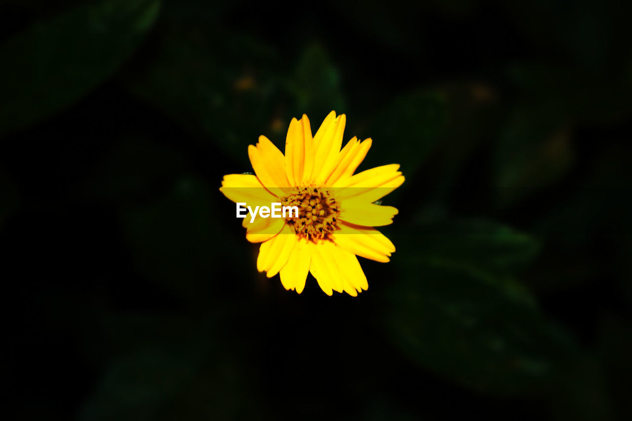 yellow, flower, flowering plant, plant, beauty in nature, growth, inflorescence, vulnerability, freshness, fragility, flower head, petal, nature, close-up, outdoors, positive emotion, people, pollen