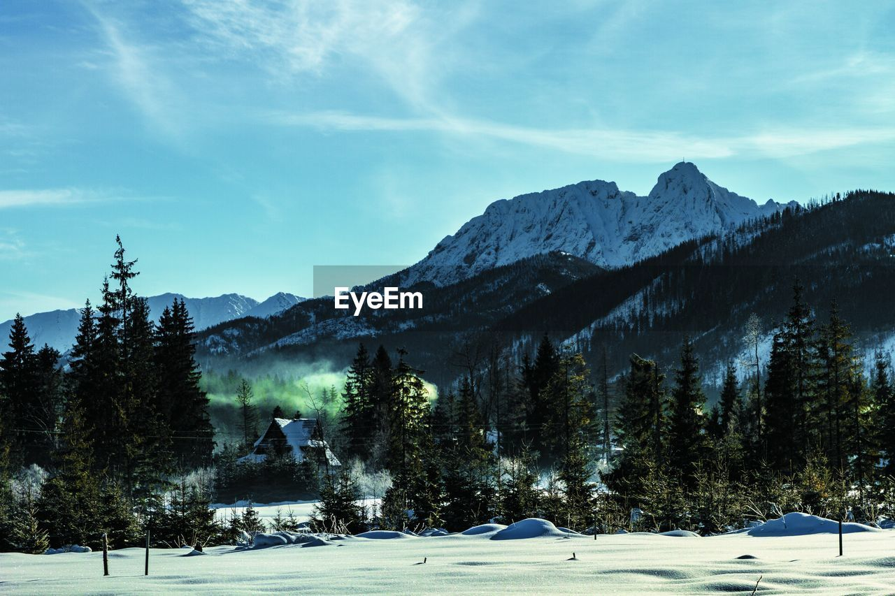 Snow Cold Temperature Winter Tree Mountain Sky Plant Beauty In Nature Scenics - Nature Nature Tranquil Scene Tranquility Cloud - Sky Day Environment Mountain Range Non-urban Scene No People Land Outdoors Snowcapped Mountain My Best Photo Stay Out
