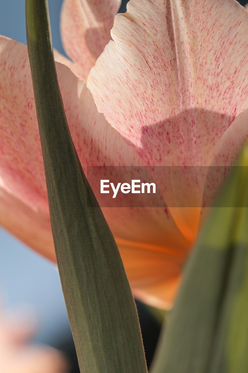 growth, nature, close-up, beauty in nature, outdoors, day, plant, freshness, no people, fragility, flower, flower head