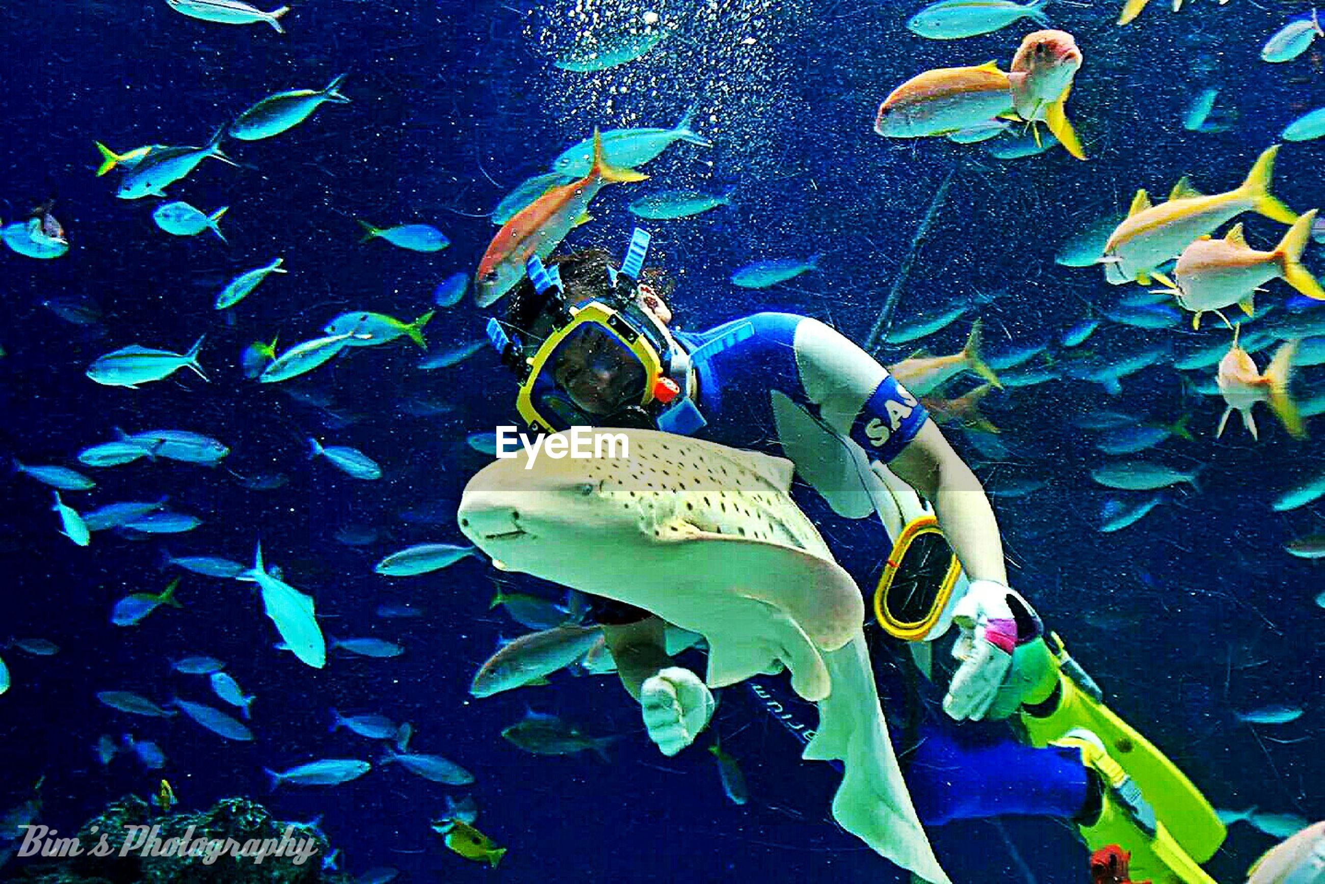 underwater, animal themes, swimming, animals in the wild, fish, sea life, undersea, wildlife, water, blue, sea, aquarium, one animal, nature, high angle view, school of fish, coral, animals in captivity, beauty in nature