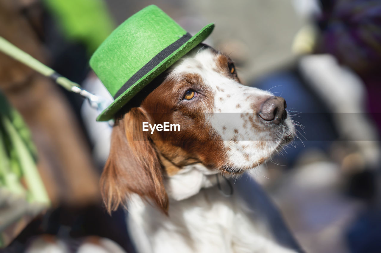 dog, one animal, canine, domestic, animal themes, domestic animals, mammal, animal, pets, vertebrate, focus on foreground, looking, looking away, close-up, day, no people, animal body part, green color, brown, collar, animal head