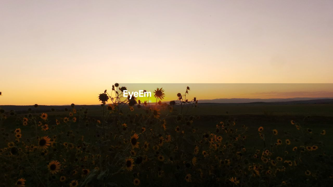 sunset, nature, beauty in nature, field, silhouette, orange color, growth, scenics, landscape, plant, tranquility, tranquil scene, sky, no people, outdoors, rural scene, flower, tree, animal themes, day