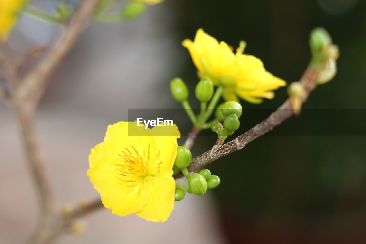 flower, flowering plant, yellow, plant, fragility, vulnerability, growth, beauty in nature, freshness, petal, close-up, inflorescence, flower head, nature, selective focus, focus on foreground, no people, day, plant stem, outdoors, springtime, pollen