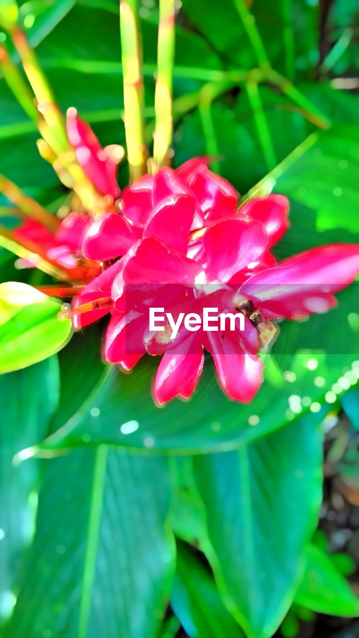 flower, petal, freshness, growth, leaf, fragility, flower head, beauty in nature, pink color, plant, nature, blooming, close-up, red, focus on foreground, green color, park - man made space, in bloom, outdoors, day