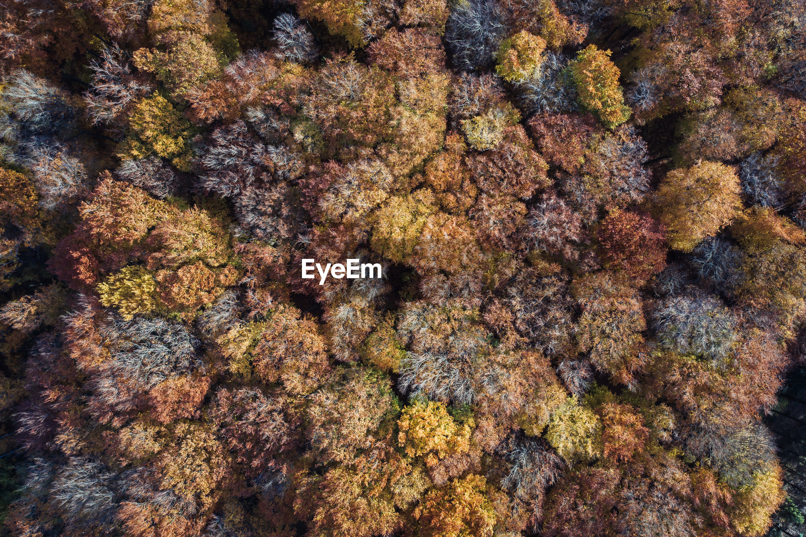 Full frame shot of multi colored trees from above