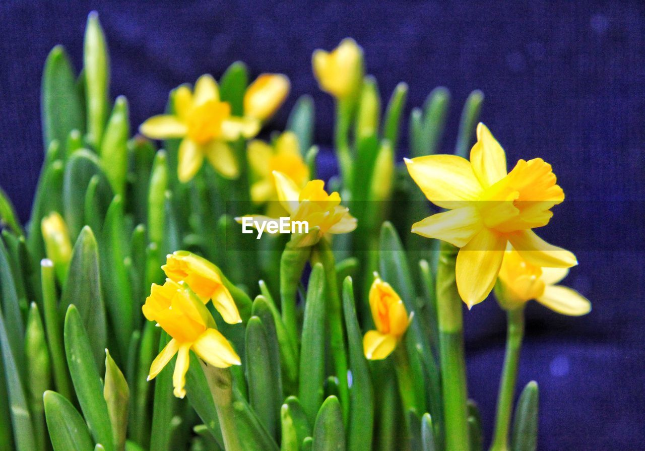 flower, flowering plant, plant, freshness, fragility, vulnerability, beauty in nature, petal, growth, close-up, inflorescence, flower head, yellow, nature, no people, botany, green color, focus on foreground, day, plant stem, outdoors, springtime, pollen, purple, flowerbed