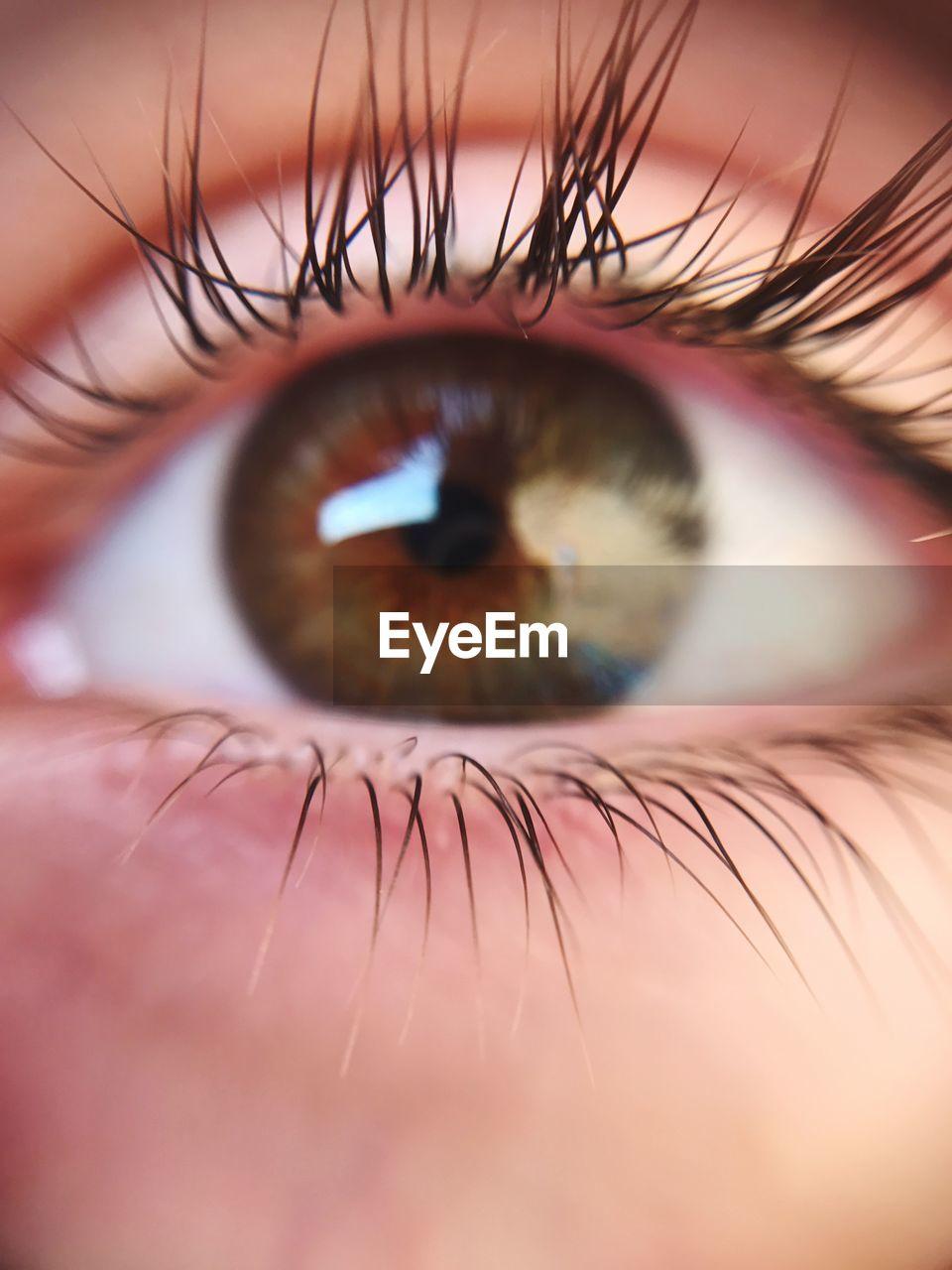 eyelash, human eye, real people, one person, human body part, sensory perception, eyesight, eyeball, macro, close-up, iris - eye, outdoors, day