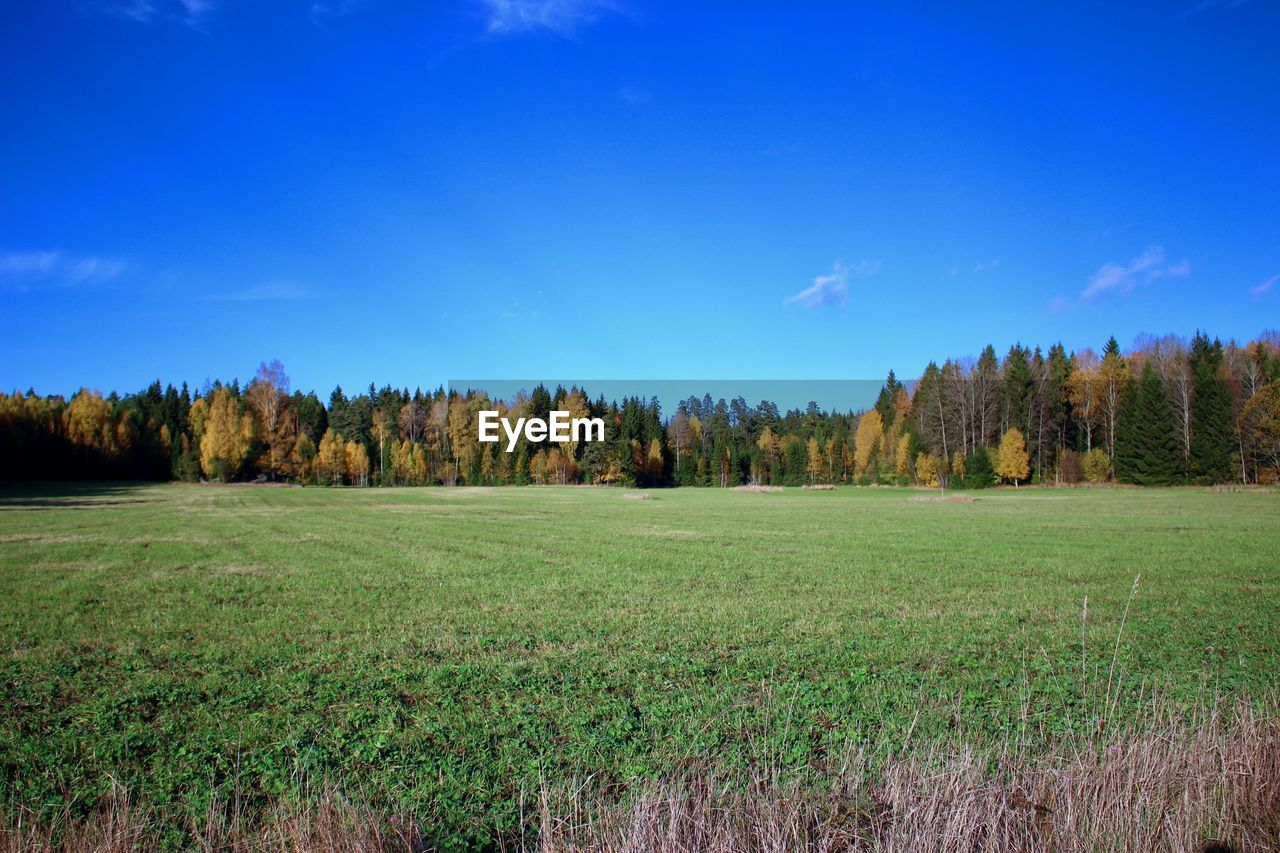 tree, field, tranquil scene, grass, nature, tranquility, landscape, scenics, beauty in nature, no people, sky, day, growth, blue, outdoors, green color, forest