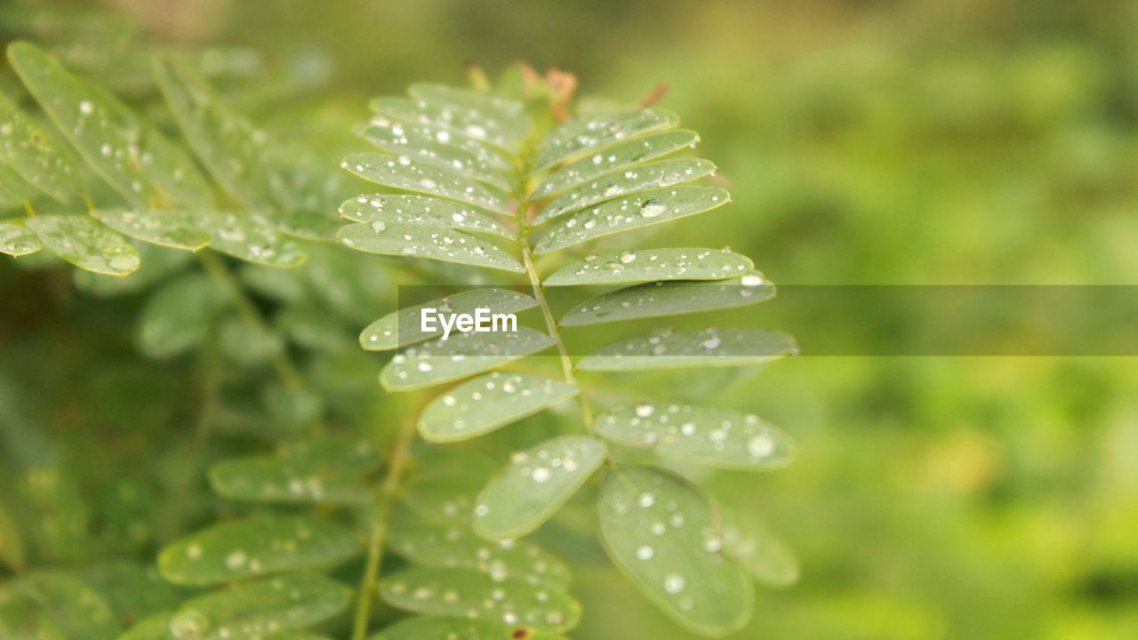 drop, water, nature, wet, green color, selective focus, no people, close-up, growth, focus on foreground, freshness, day, beauty in nature, raindrop, plant, leaf, fragility, purity, outdoors