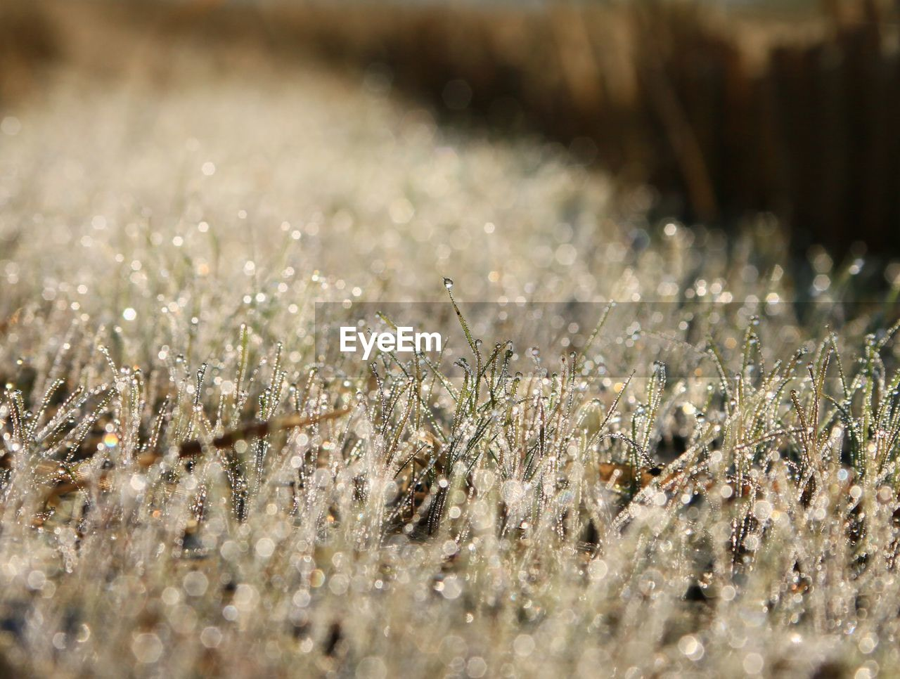 nature, field, growth, beauty in nature, no people, tranquility, selective focus, day, outdoors, grass, plant, cold temperature, close-up, fragility, freshness