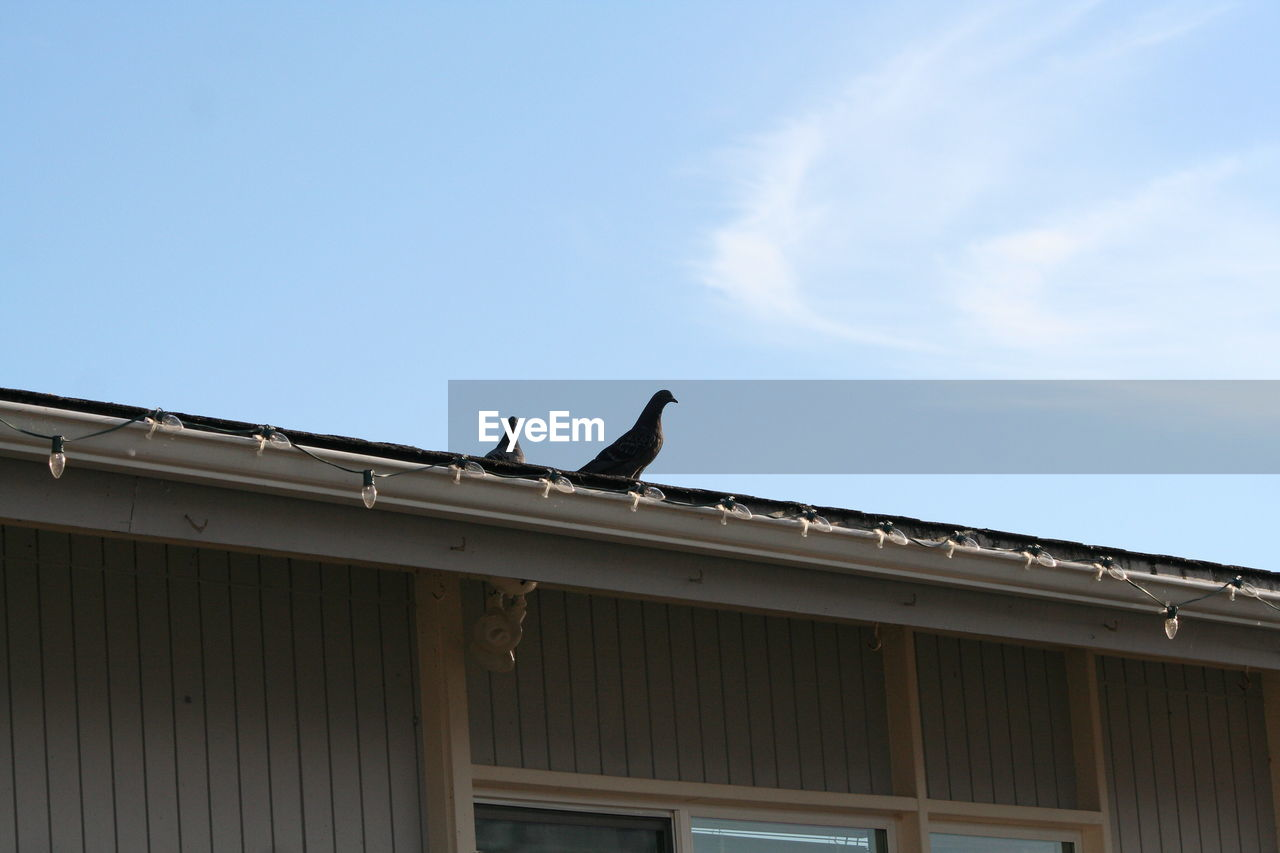 bird, animals in the wild, animal themes, perching, animal wildlife, low angle view, one animal, roof, day, outdoors, built structure, no people, architecture, sky, nature