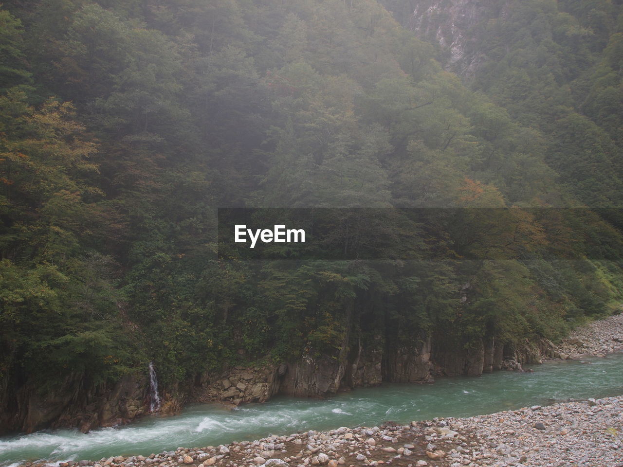 tree, plant, forest, land, scenics - nature, beauty in nature, water, nature, mountain, environment, tranquility, day, fog, tranquil scene, non-urban scene, growth, no people, outdoors, rainforest, flowing water