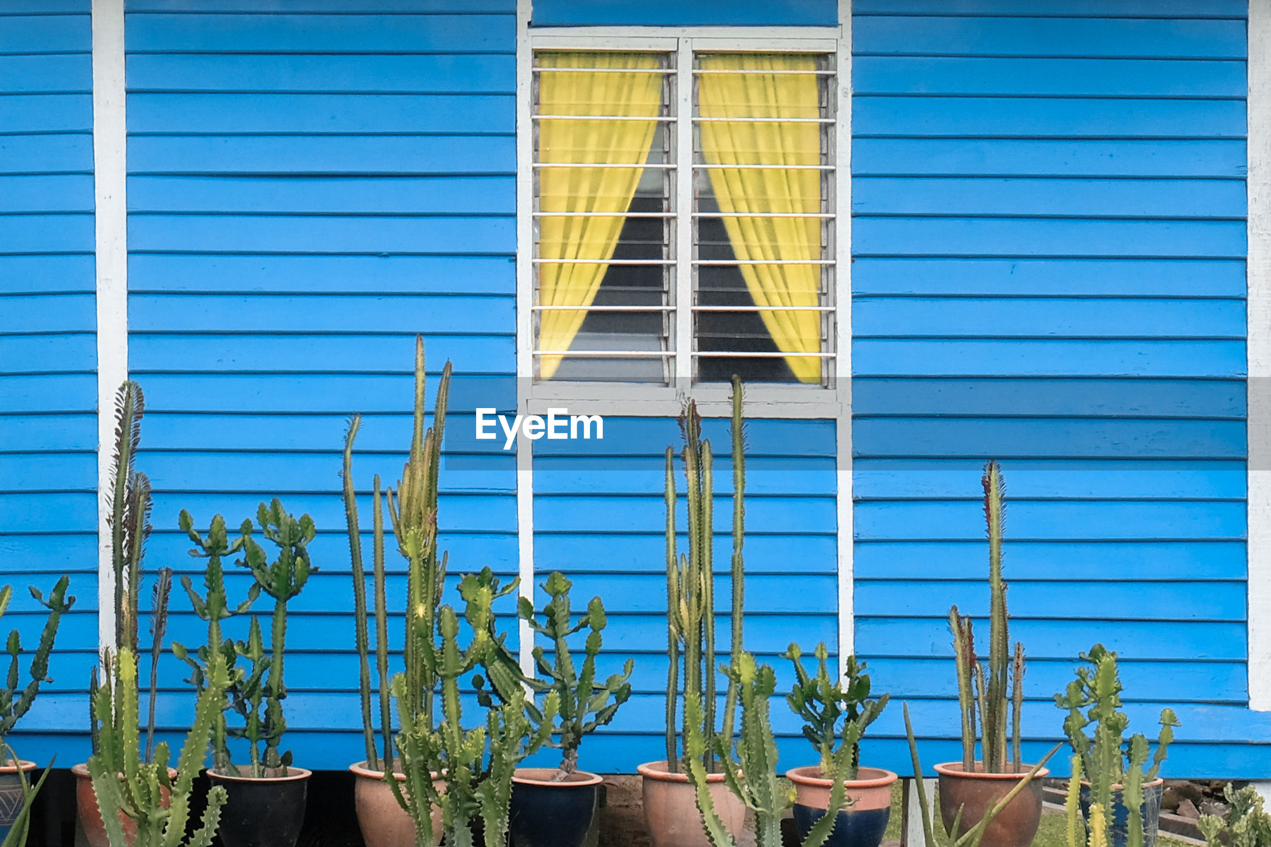 LOW ANGLE VIEW OF POTTED PLANTS AGAINST BLUE BUILDING