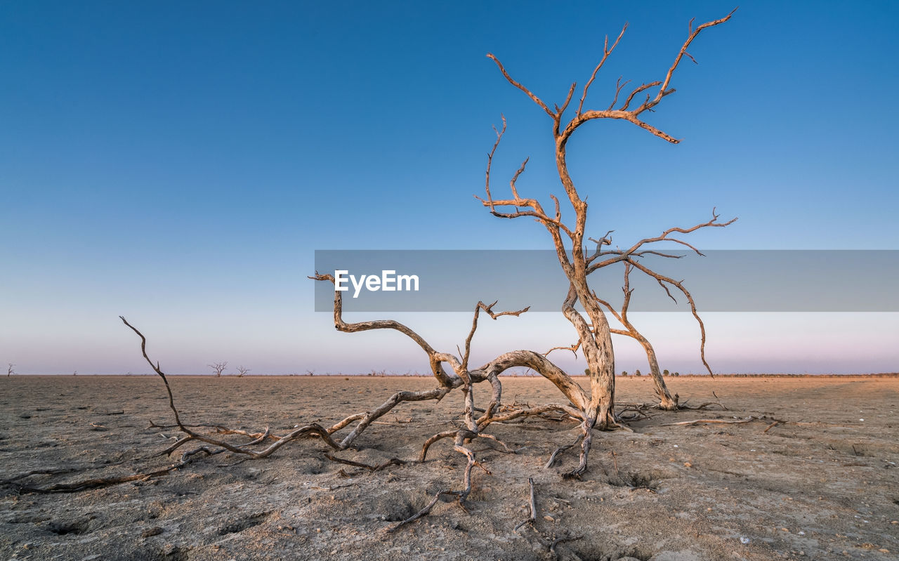 DEAD PLANT ON LAND AGAINST SKY
