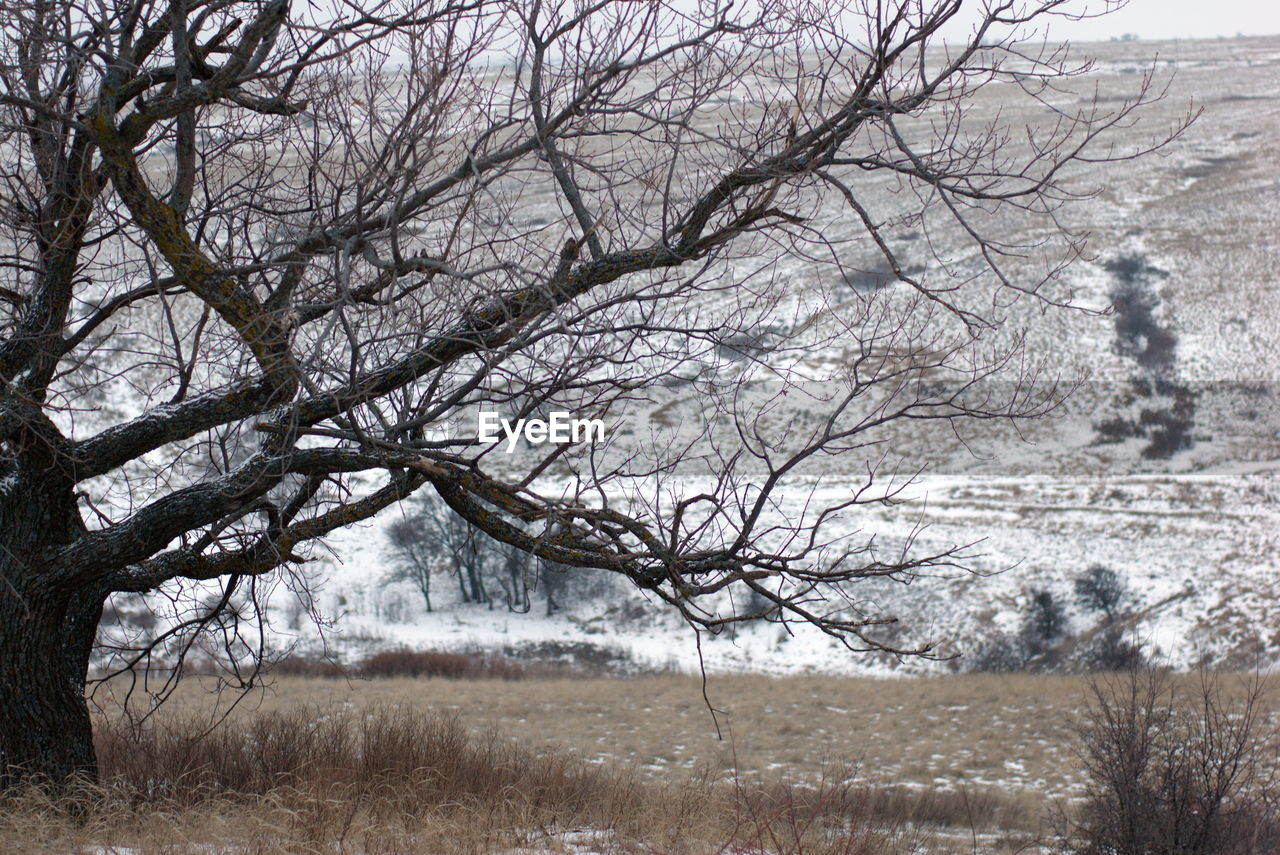 BARE TREE ON SNOW FIELD