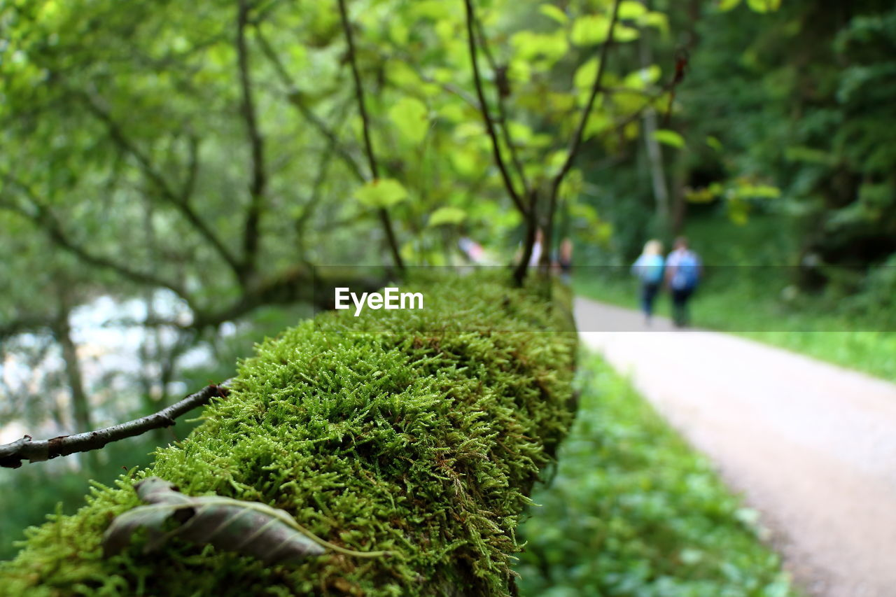 plant, green color, tree, growth, focus on foreground, day, nature, close-up, beauty in nature, incidental people, outdoors, park, park - man made space, moss, tranquility, selective focus, footpath, grass, plant part