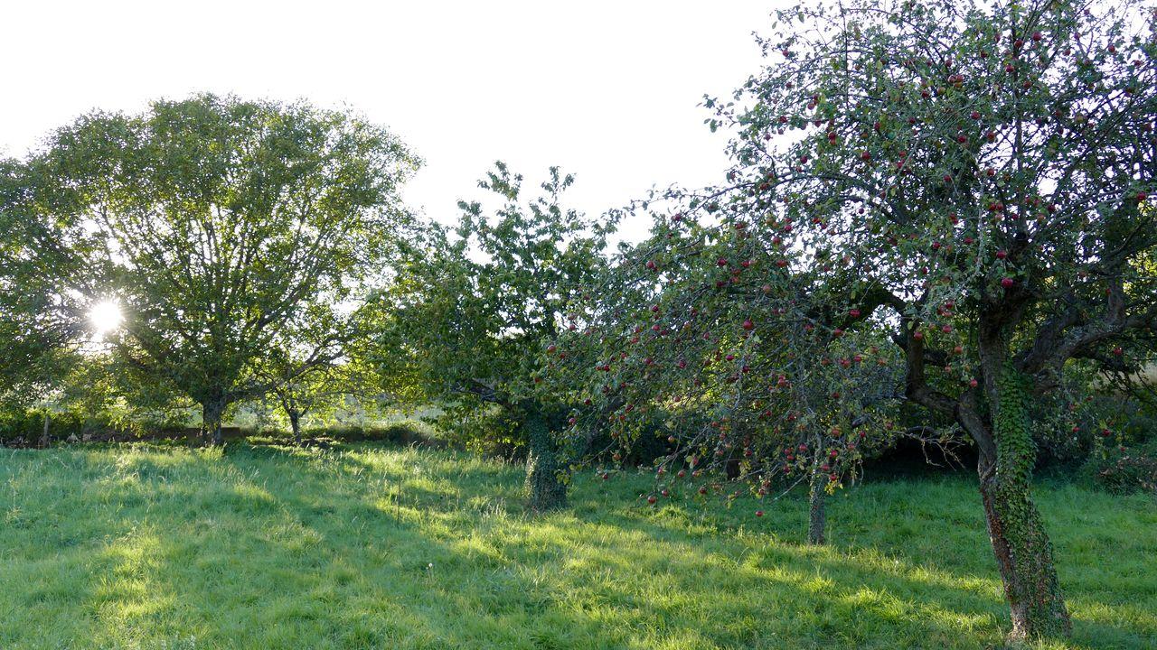 Apple trees growing in grassy field against sky