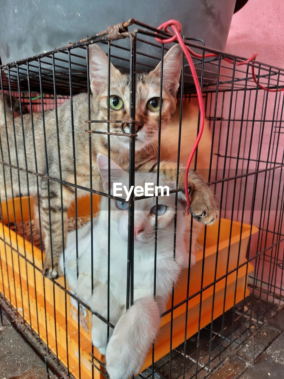 mammal, pets, domestic, domestic animals, one animal, cage, feline, cat, vertebrate, domestic cat, portrait, looking at camera, metal, animals in captivity, close-up, no people, whisker