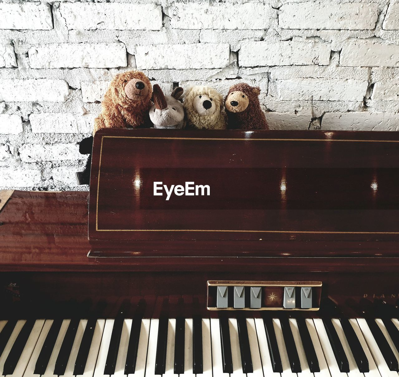 musical equipment, musical instrument, music, animal themes, mammal, animal, piano, arts culture and entertainment, domestic, pets, domestic animals, piano key, one animal, no people, cat, wood - material, vertebrate, domestic cat, indoors, feline, animal head, keyboard, keyboard instrument