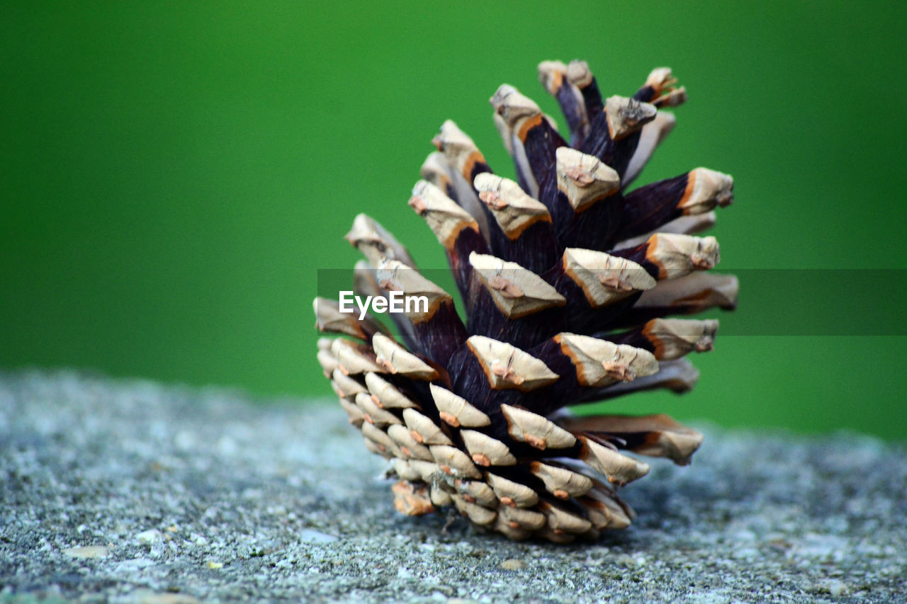 close-up, no people, focus on foreground, green color, pine cone, selective focus, still life, nature, plant, beauty in nature, table, natural pattern, day, indoors, pattern, brown, large group of objects, pinaceae, dry, coniferous tree, natural condition