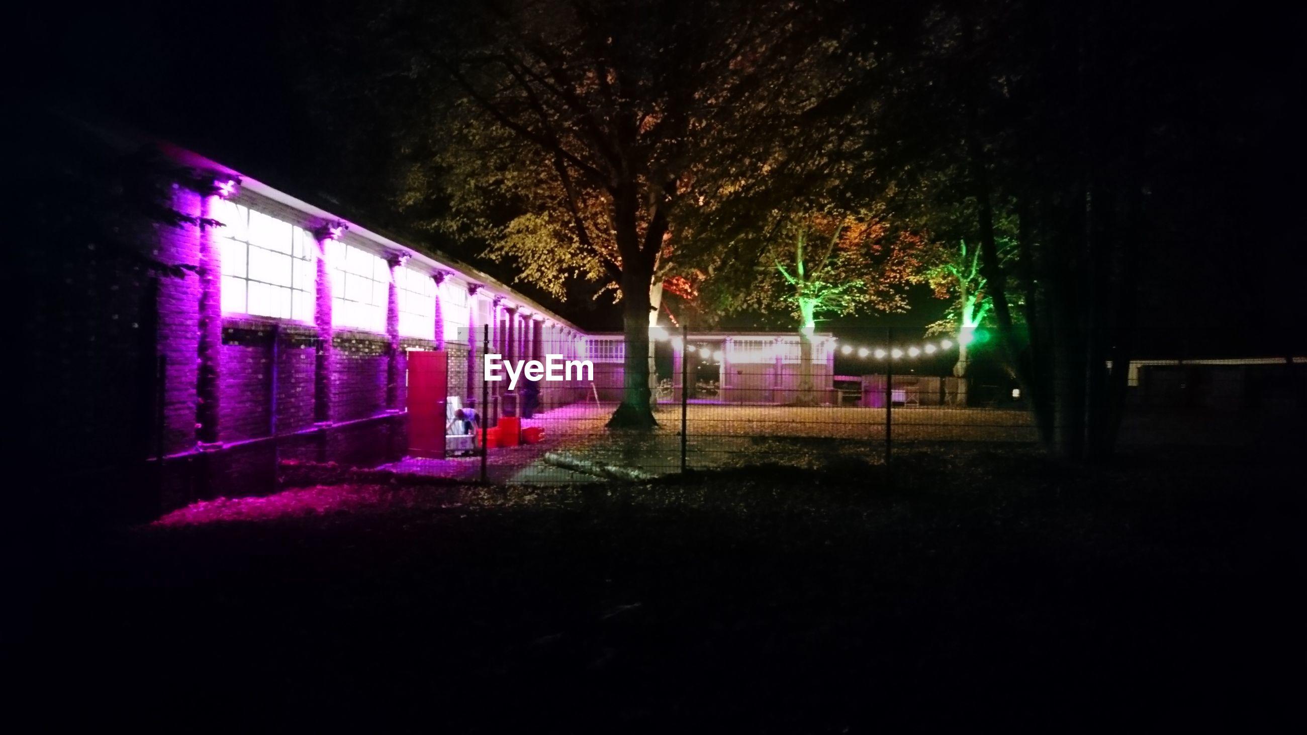 illuminated, tree, night, no people, outdoors, multi colored, architecture, nature