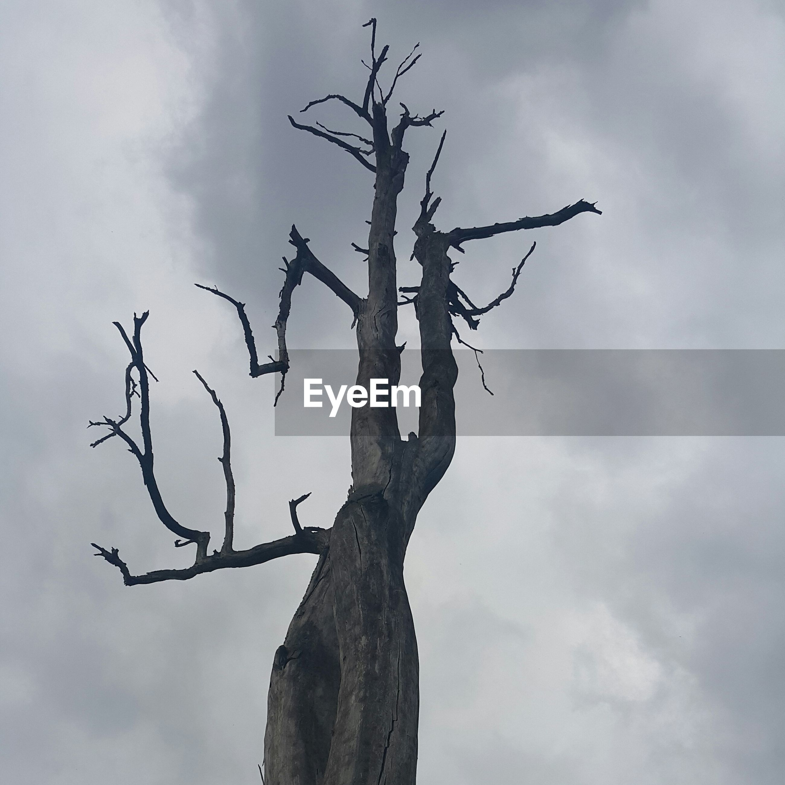 sky, bare tree, low angle view, branch, tree, cloud - sky, tree trunk, nature, tranquility, dead plant, cloudy, cloud, day, outdoors, dried plant, no people, beauty in nature, tranquil scene, scenics, growth