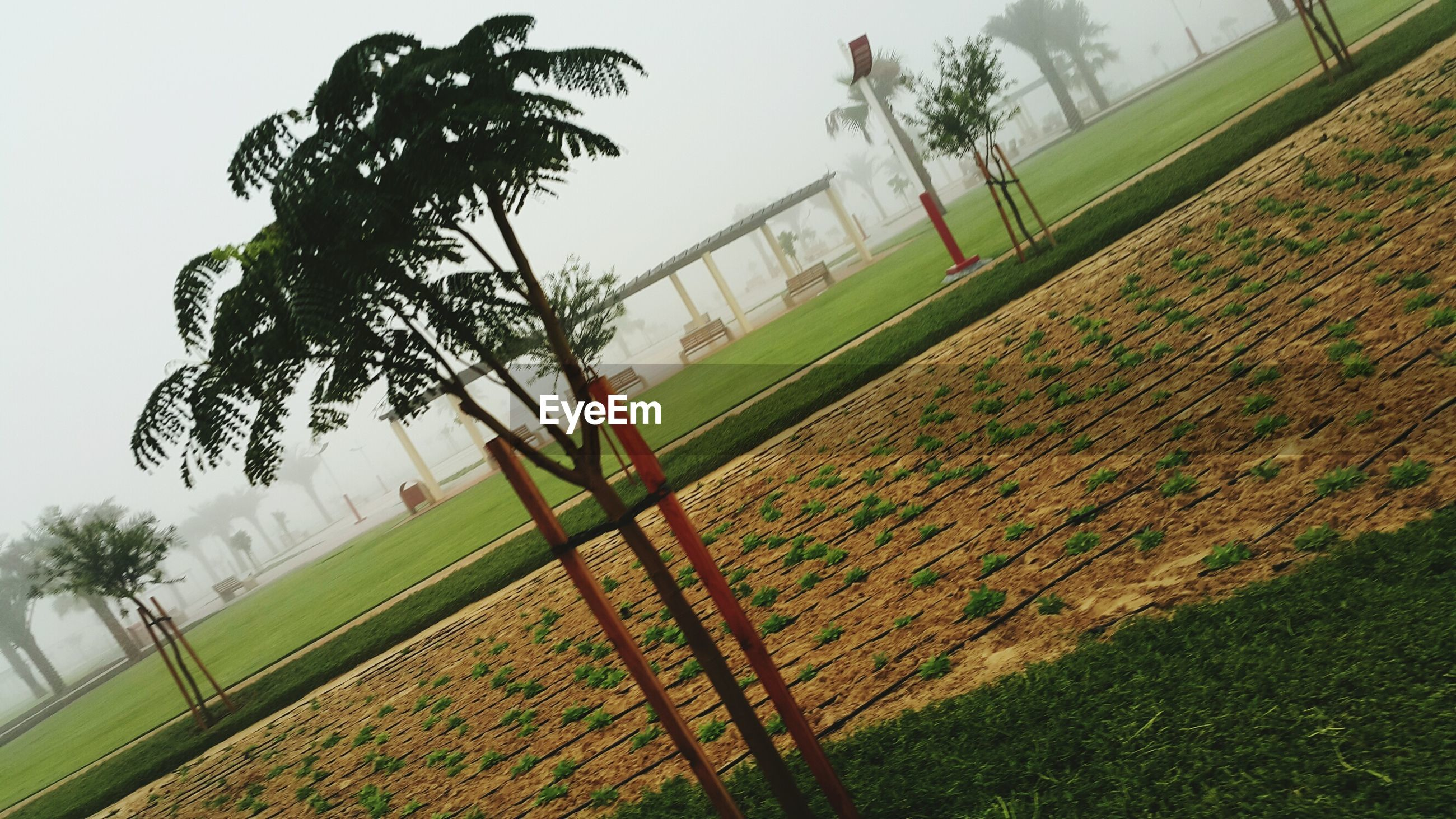 tree, growth, grass, nature, field, beauty in nature, sky, sport, day, no people, green color, outdoors, agriculture