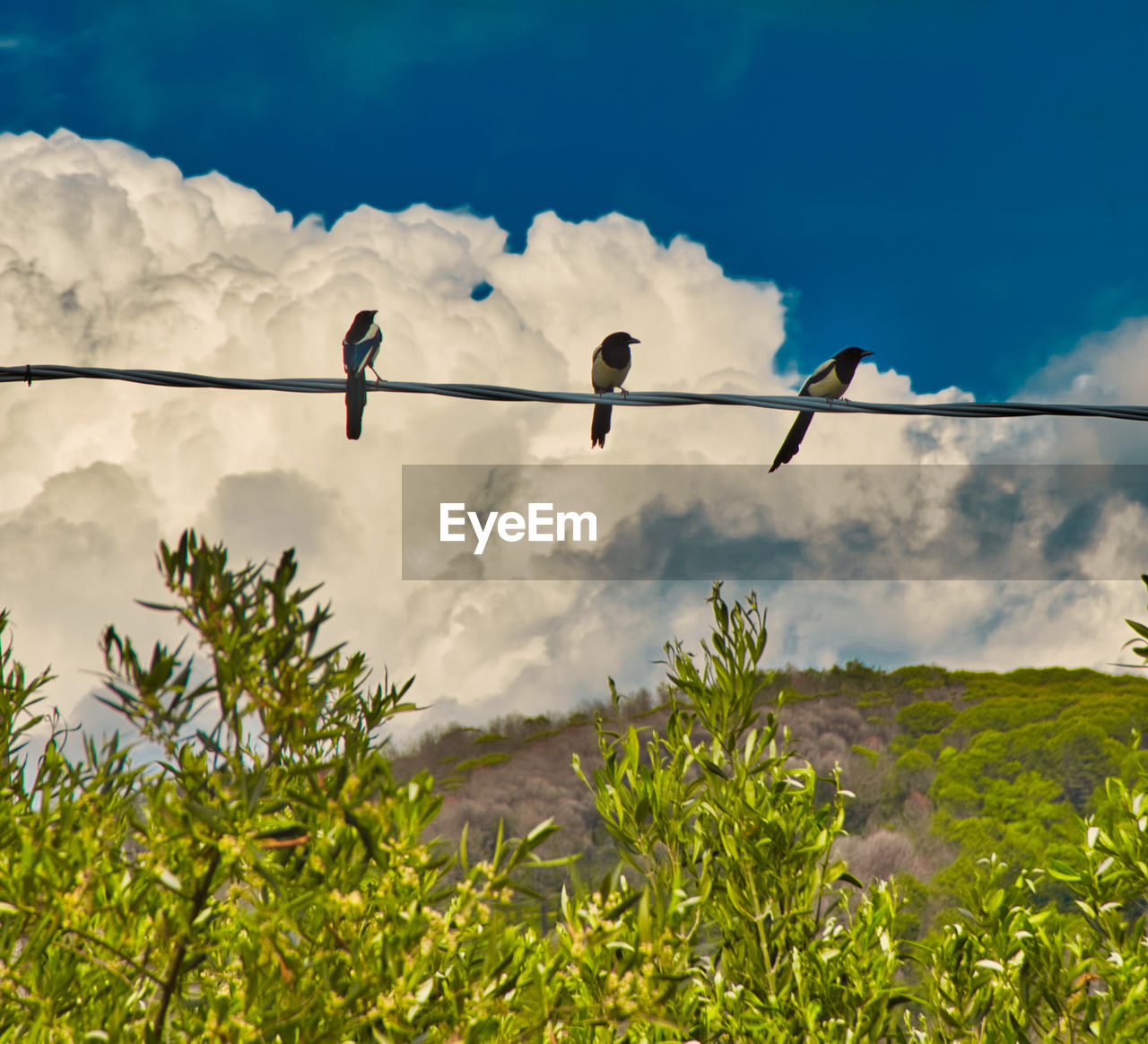 bird, cloud - sky, sky, animal wildlife, animal themes, animal, animals in the wild, plant, vertebrate, perching, nature, low angle view, group of animals, day, cable, no people, growth, tree, green color, beauty in nature, outdoors