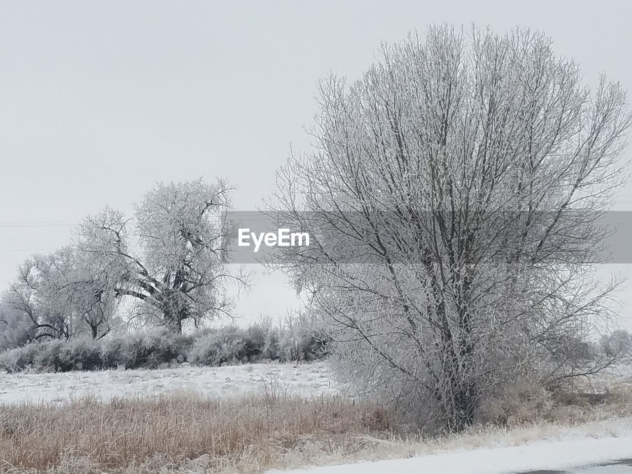 bare tree, winter, tree, nature, cold temperature, snow, tranquility, beauty in nature, clear sky, outdoors, landscape, day, branch, tranquil scene, no people, field, scenics, sky