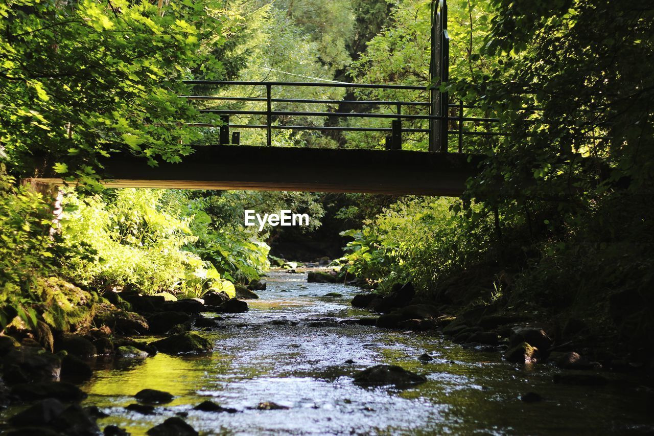 tree, plant, water, nature, connection, day, forest, no people, bridge, architecture, built structure, growth, river, outdoors, railing, bridge - man made structure, the way forward, transportation, direction, flowing water, footbridge, flowing