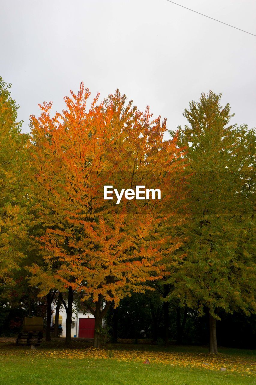 autumn, tree, change, leaf, nature, no people, day, tranquility, outdoors, beauty in nature, sky, grass