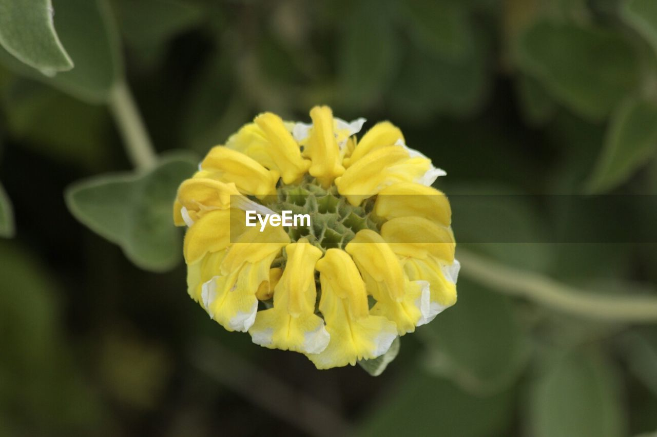 Close-Up Of Yellow Flower In Park