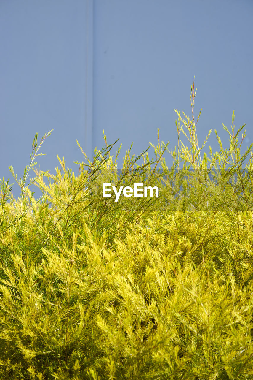 Close-Up Of Plants Against Clear Sky