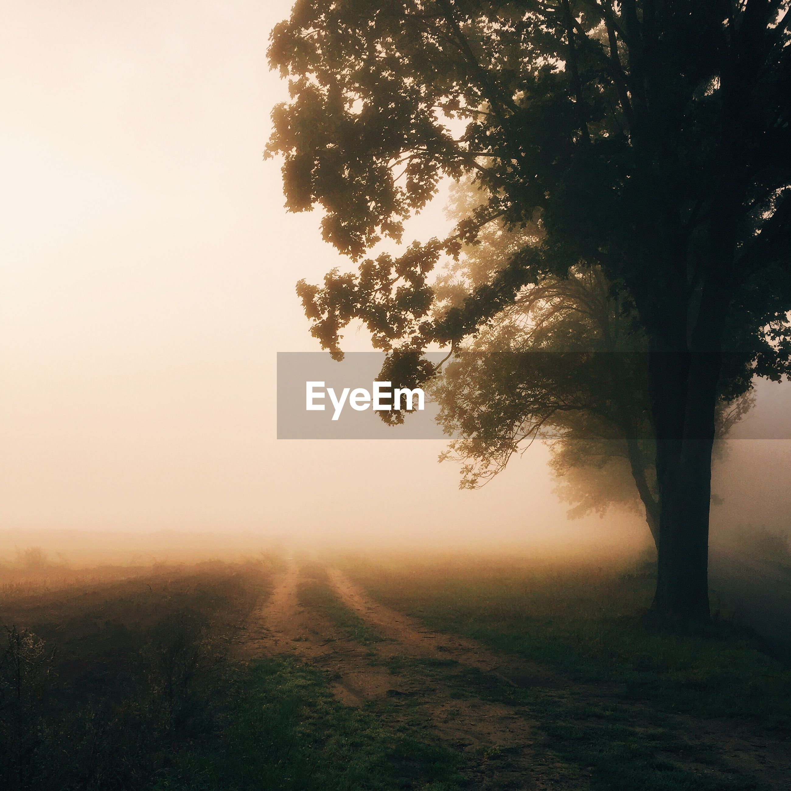 Tree on field during foggy weather at dusk