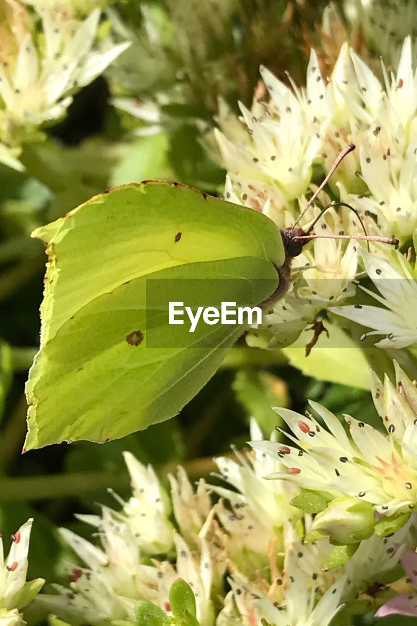 green color, leaf, growth, nature, insect, close-up, focus on foreground, day, no people, plant, one animal, animals in the wild, outdoors, animal themes, sunlight, fragility, beauty in nature, freshness, flower, flower head