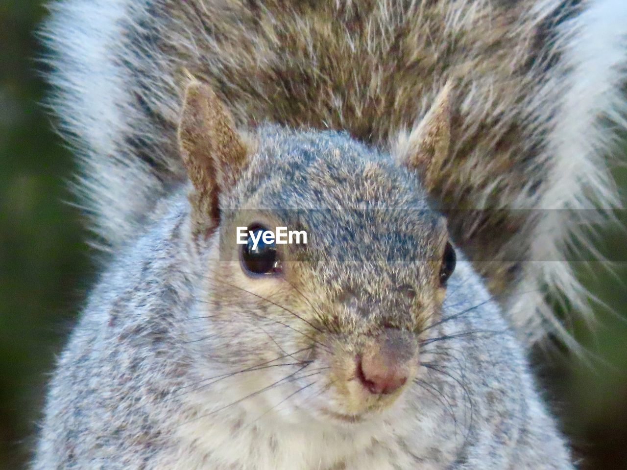 animal themes, animal, one animal, animal wildlife, mammal, close-up, rodent, animals in the wild, no people, animal body part, focus on foreground, day, portrait, animal head, vertebrate, whisker, nature, outdoors, looking, looking at camera, animal eye