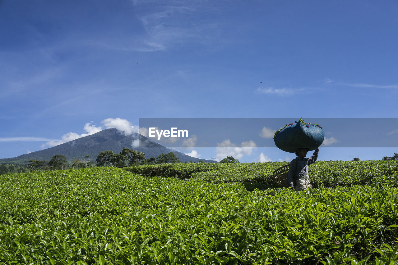 Farmer on agricultural field during sunny day