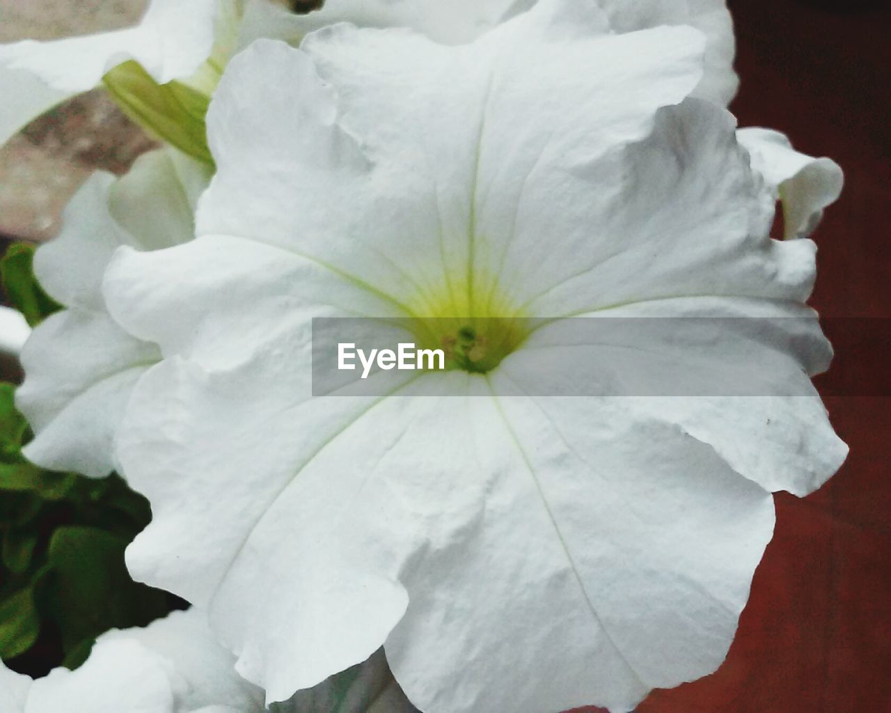 flower, petal, white color, nature, beauty in nature, flower head, fragility, no people, close-up, freshness, day, outdoors, growth