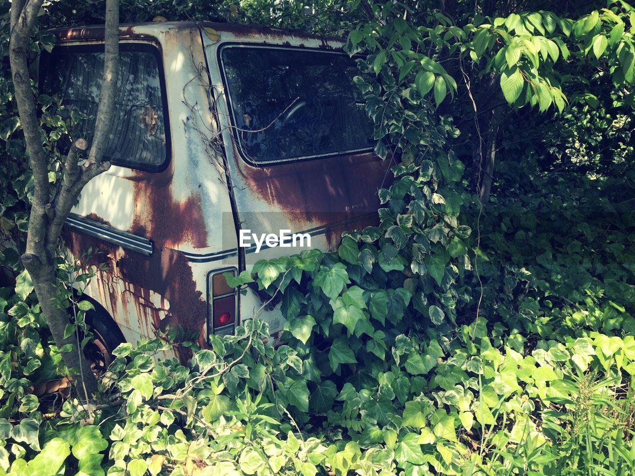 Abandoned vehicle amid plants