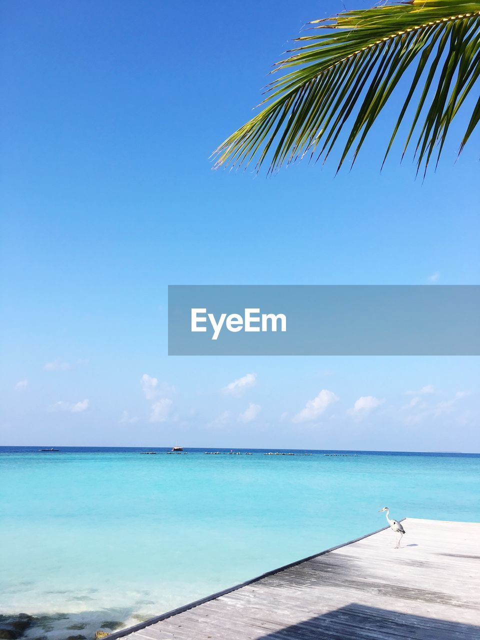 sky, sea, water, horizon over water, beauty in nature, scenics - nature, horizon, beach, blue, tranquility, nature, tranquil scene, day, palm tree, tropical climate, idyllic, tree, land, no people, outdoors, palm leaf, turquoise colored, swimming pool