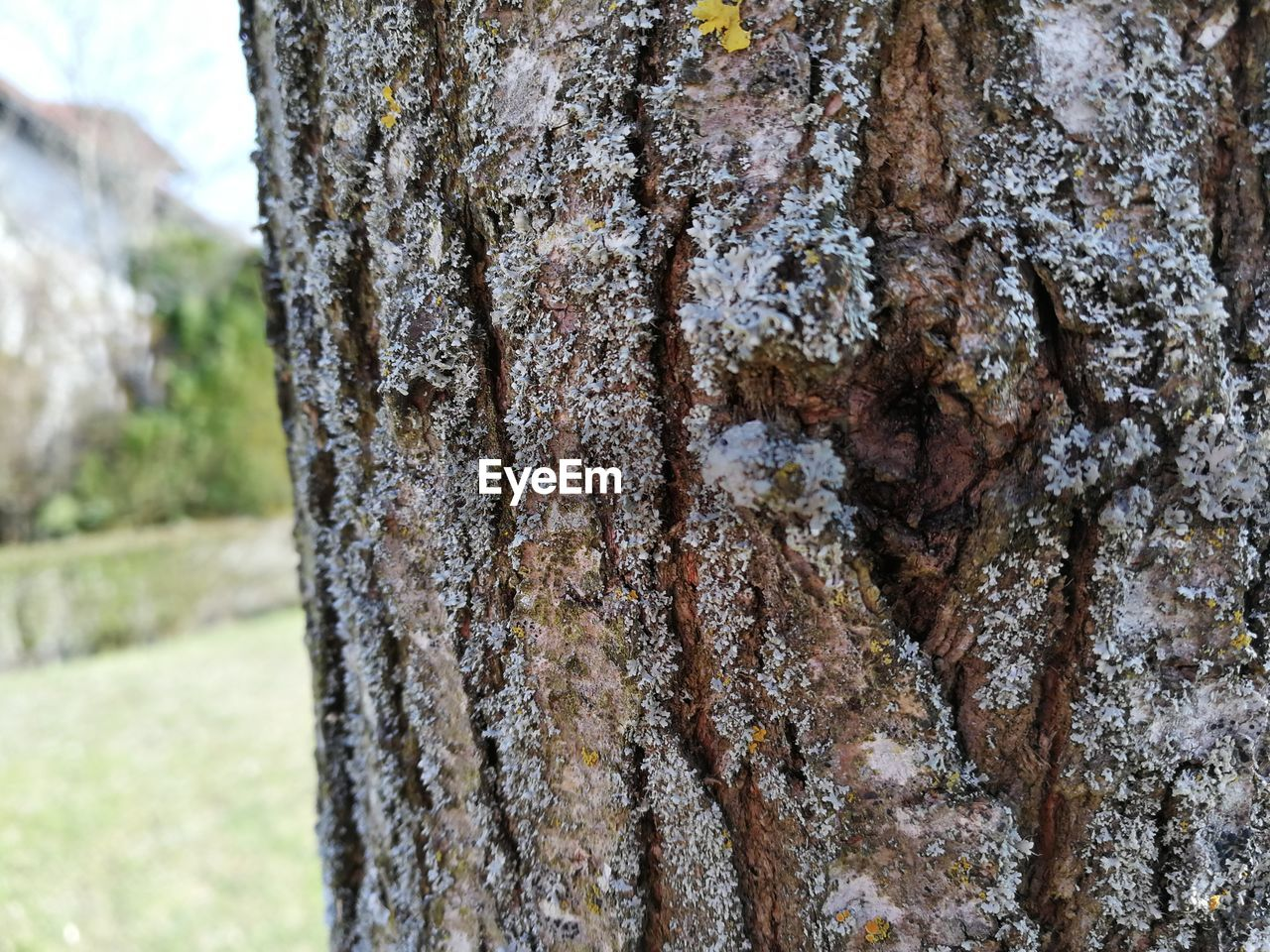 tree trunk, textured, rough, tree, day, focus on foreground, lichen, close-up, no people, nature, outdoors, bark, moss