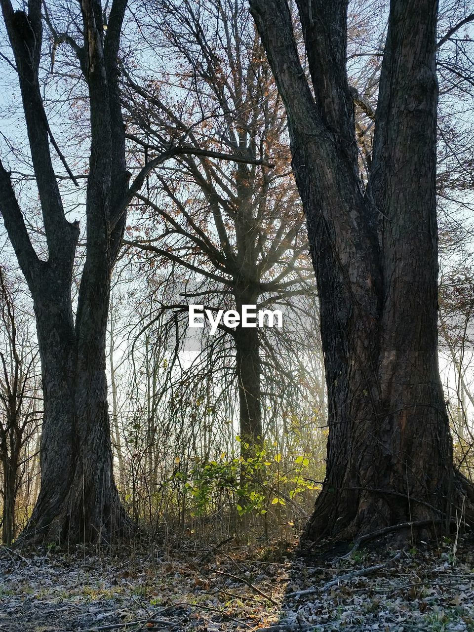 tree, tree trunk, bare tree, nature, day, branch, tranquility, outdoors, no people, forest, beauty in nature, scenics, sky