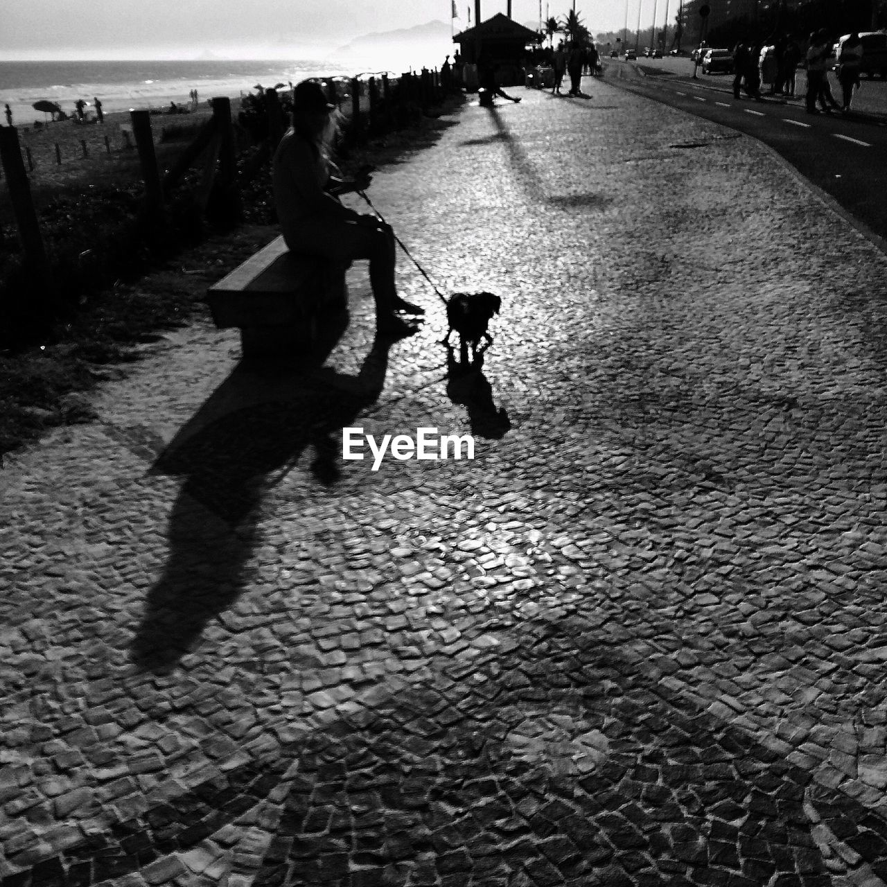 Silhouette woman with dog on street