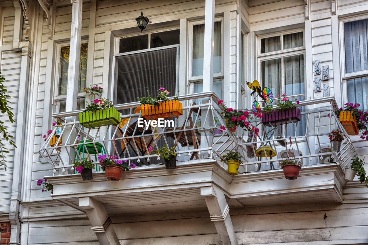 flower, architecture, building exterior, built structure, potted plant, window, balcony, day, outdoors, growth, plant, window box, nature, no people